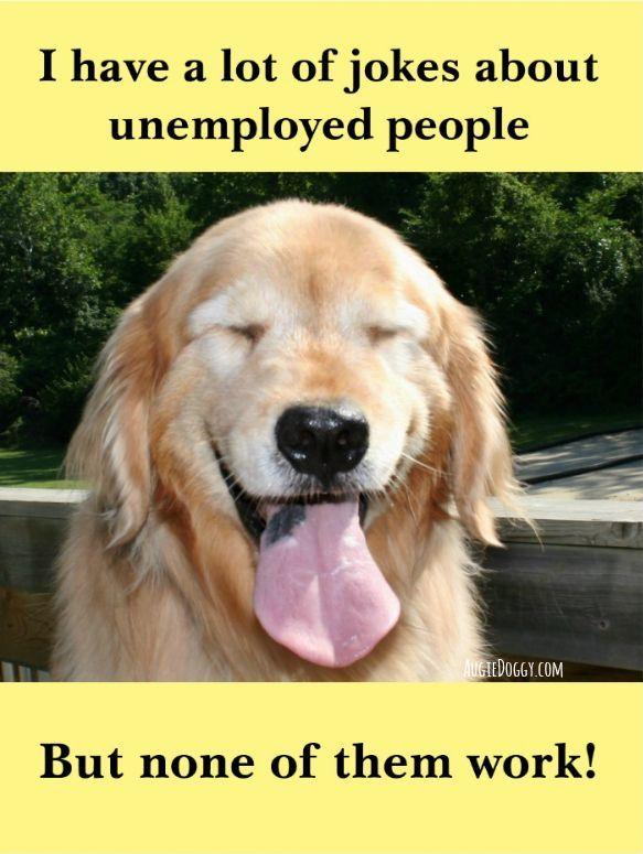 Funny Golden Retriever Unemployed People Joke Meme Postcard