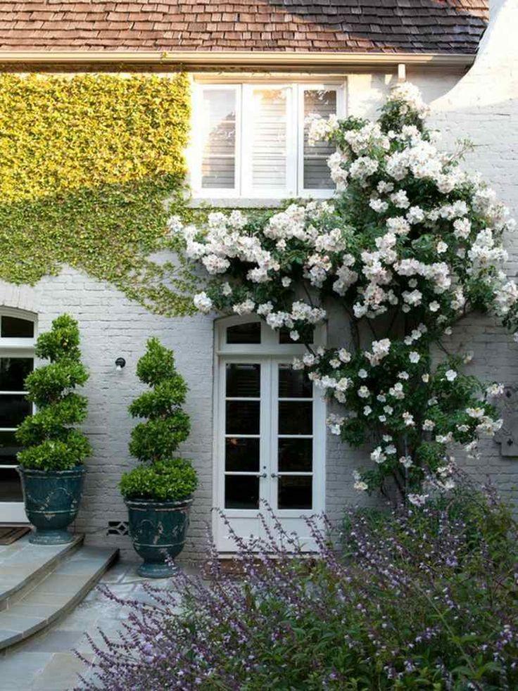 jardin de style anglais avec lierre, buis et Dipladénia de Sander blanche