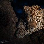 Las 25 fotos reunidas por Ranger Diaries que muestran la vida salvaje