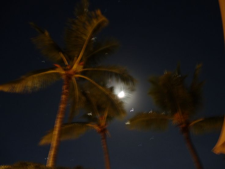 moon and coconut trees, Mauritius, Africa