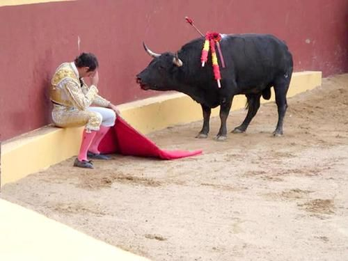 This incredible photo marks the end of Matador Torero Alvaro Munera's career. He collapsed in remorse mid-fight when he realized he was having to prompt this otherwise gentle beast to fight.