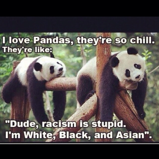 PandasLaugh, Quote, Giants Pandas, Pandas Bears, Funny Stuff, Humor, Funnystuff, Giggles, Animal