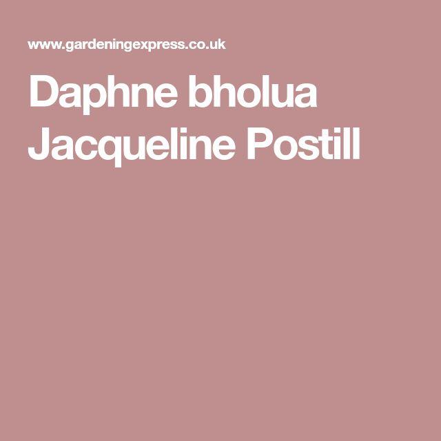 Daphne bholua Jacqueline Postill