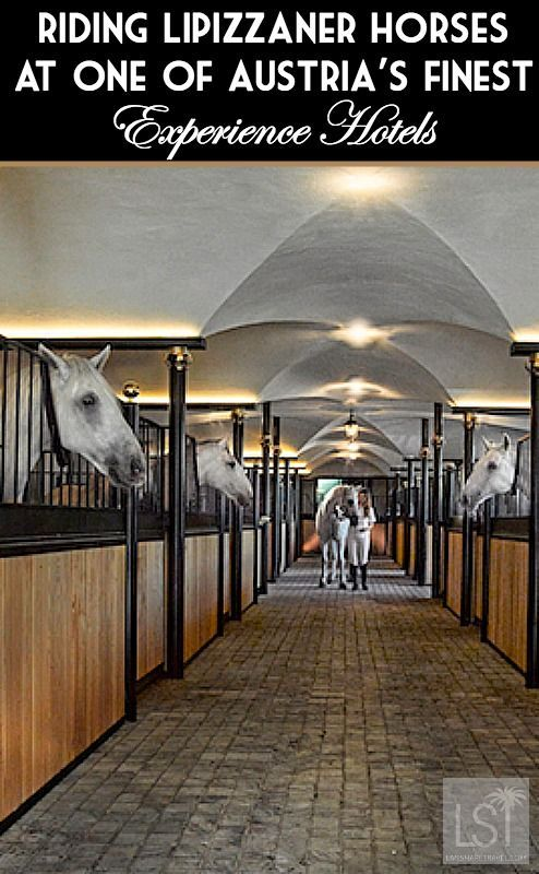Stable with Lipizzaner horses at Bio-Hotel Stanglwirt in Tirol Austria, one of Austria's Finest Experience Hotels.