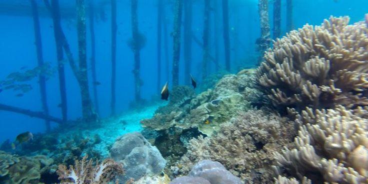 """Pulau Kri, Titik Menyelam Populer Di Raja Ampat Yang """"Tercoreng"""" - https://darwinchai.com/traveling/pulau-kri-titik-menyelam-populer-di-raja-ampat-yang-tercoreng/"""