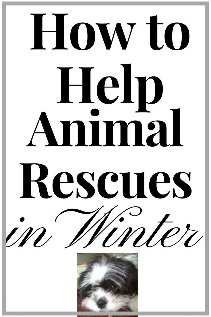 Animal Rescue How You Can Help Animal Rescue Socializing Dogs Dog Care Tips