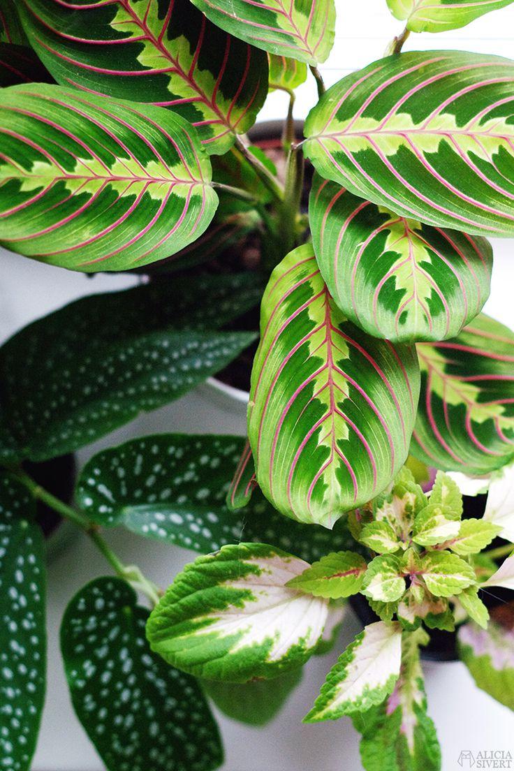 Plants, photo by Alicia Sivertsson.