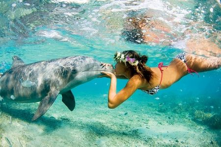 Dolfins! the most beutifull and intelected animal of the world. hope they always be protected against crule people.