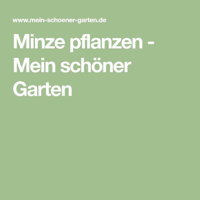 Minze pflanzen - Mein schöner Garten