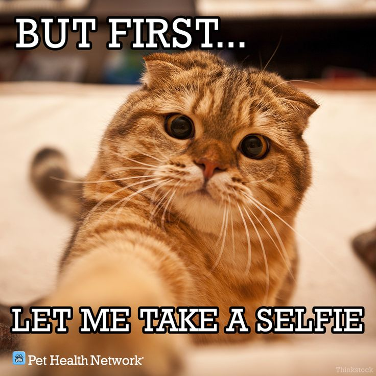But first.. let me take a selfie cat selfiecat Cats