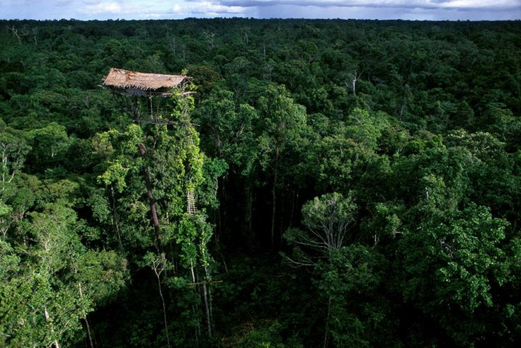"""[by george steinmetz] """"In 1995 I had the rare opportunity to document clans of tree-dwelling people in Indonesian New Guinea that had no prior contact with anyone outside their language group..."""""""
