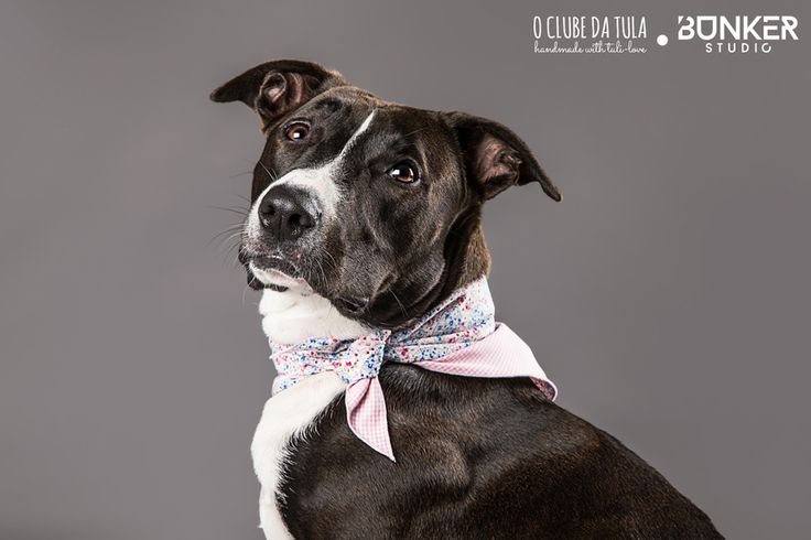 "Pañuelo para perros ""Two sides"", 100% algodón. Original e imperdible, dos pañuelos en uno, ¿no es genial? Encuéntralo en O Clube da Tula... http://oclubedatula.com/es/produtos/item/panuelo-two-sides/"