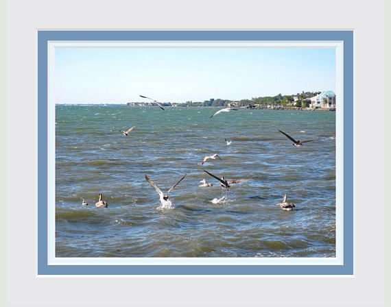 Wall Art Gift for Wedding, Anniversary, Birthday. Fine Art Photo. Pelicans Fishing. Printed Triple Faux Mat. Fits into an 11x14 inch Frame.
