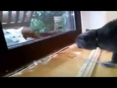 Приколы с кошками 2014  1
