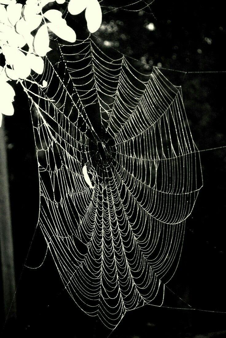 49 mejores imágenes de Are you afraid of spiders? en Pinterest ...