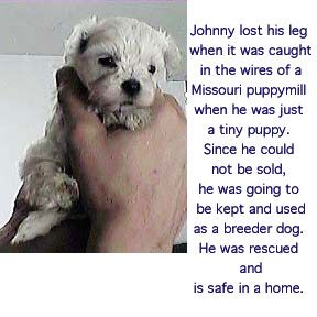 Save A Dog Dont Buy From Pet Shops