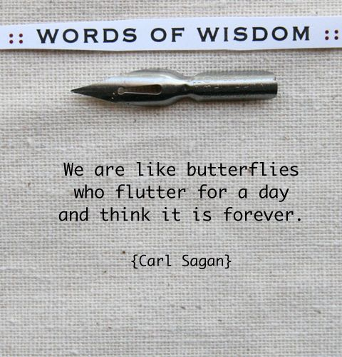 """We are like butterflies who flutter for a day and think it is forever."" - Carl Sagan quote"
