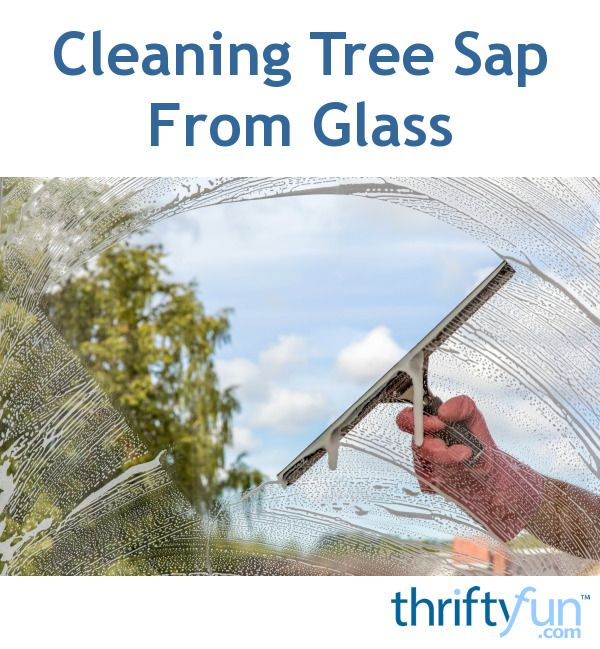 This is a guide about cleaning tree sap from glass. Removing tree sap from…