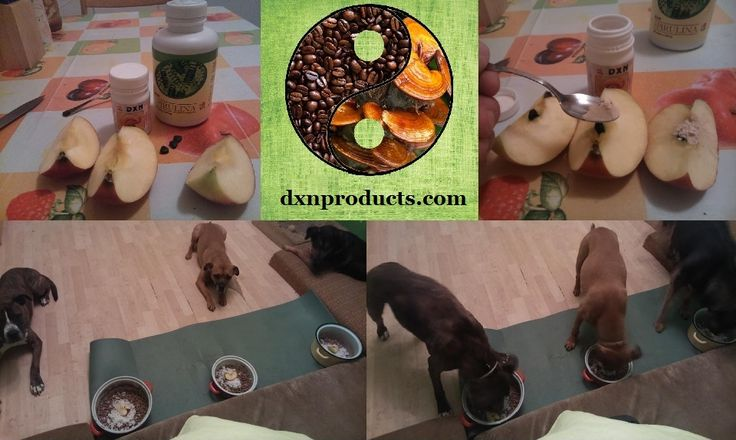 Ganoderma is the perfect dog food supplement: vitality and strong immune system.
