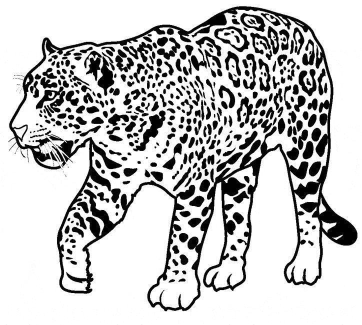 Free Jaguar Coloring Page
