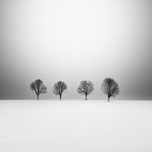Four Trees by *UweLangmann on deviantART