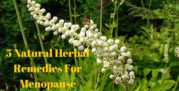 5 Natural Herbal Remedies For Menopause