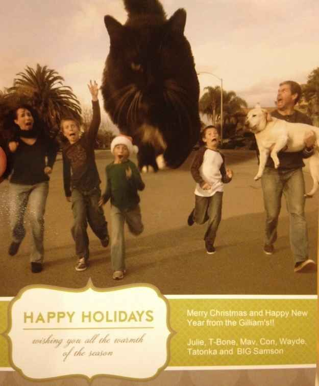 37 best Funny Christmas Card Ideas! images on Pinterest | Holiday ...