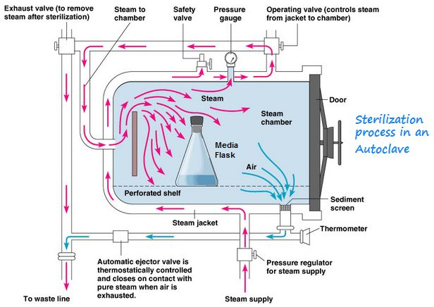 Steam sterilization heating in an autoclave by www steam sterilization heating in an autoclave by pharmaguideline gmp pinterest ccuart Image collections
