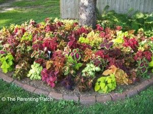 types of flowers to plant under deciduous and pine trees
