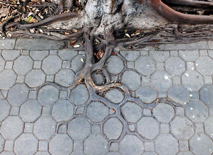 adaptive roots in concrete jungle photo