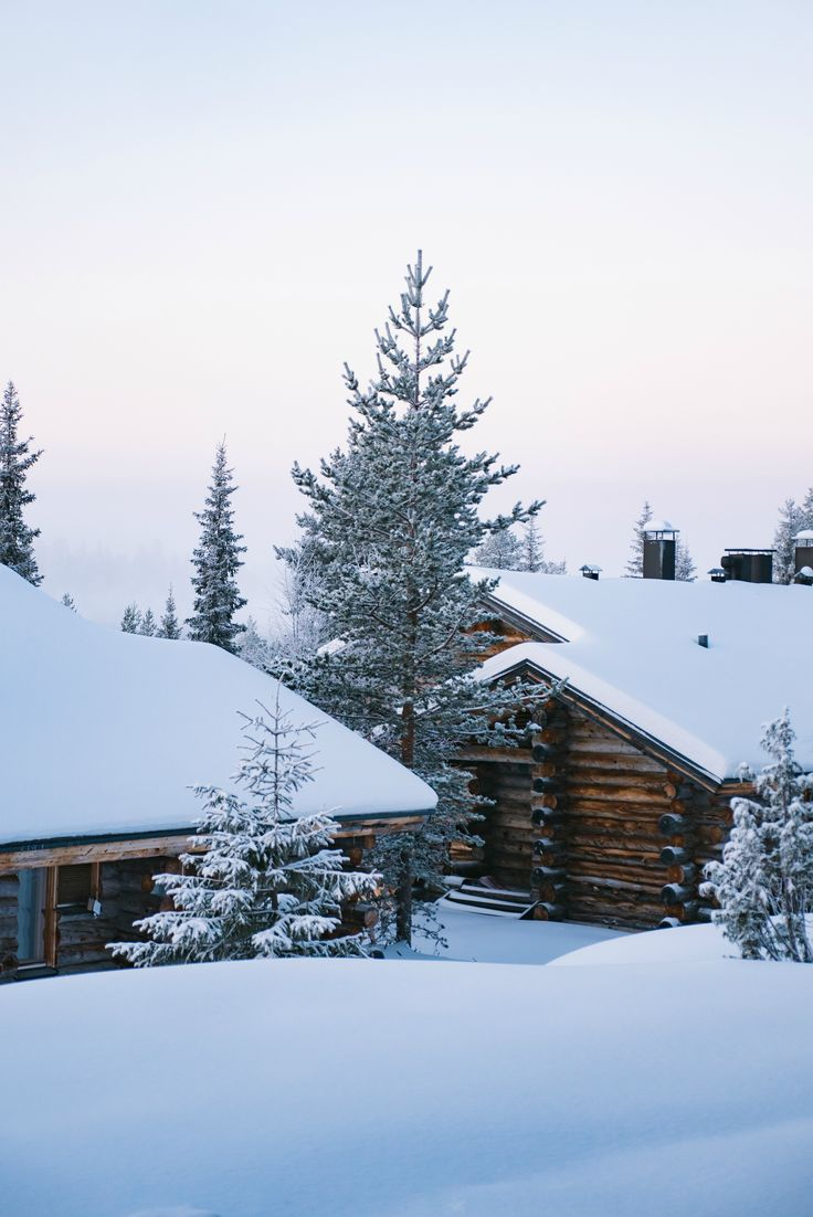 Snowy cabins and trees. Winter nature photography in Salla Finland Lapland.