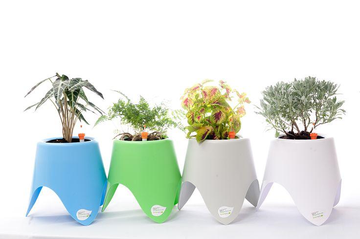TriPot I™ - Self-watering Planter www.greenamic.com | Self