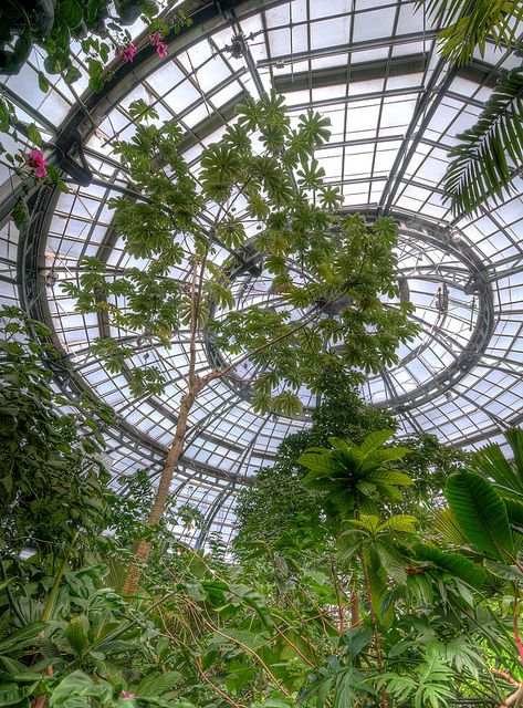 17 best images about huntington gardens california on for Indoor botanical gardens