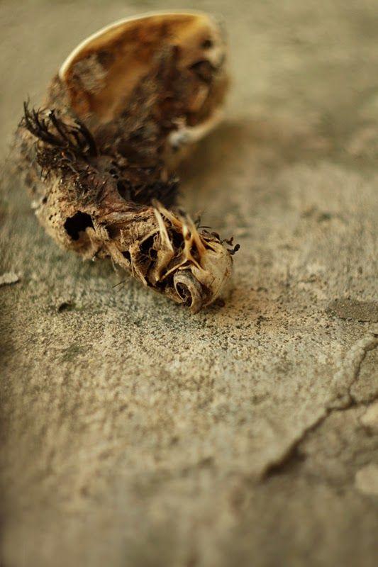 CannonCat - Karolina Falkiewicz art: Vanitas (birds bones)