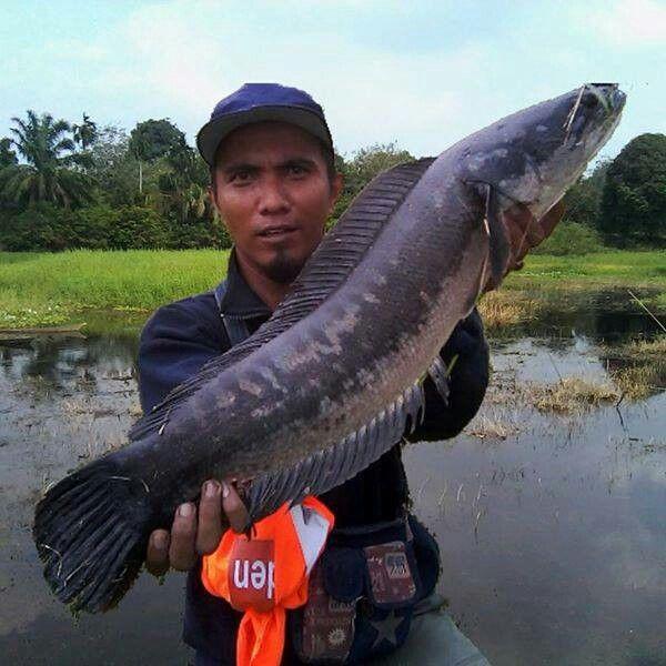 Danau Belanti Rantau Kasih Kampar Kiri Riau
