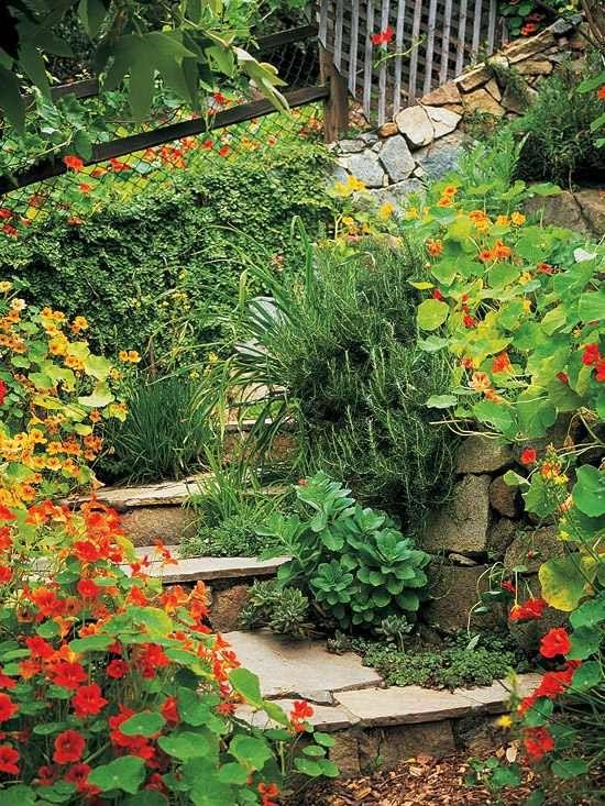 jardin sur une pente verdure fleurs en jaune sympa
