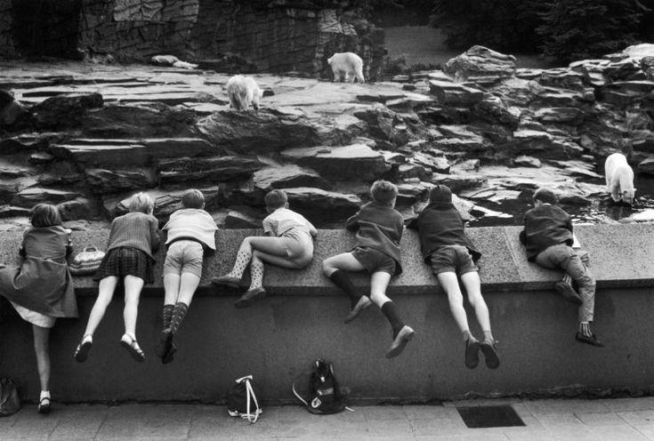 WILLY RONIS - Zoo de Berlin Est, 1967
