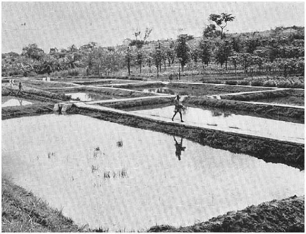 Tanques de piscicultura no Dundo 1960 http://www.sanzalangola.com/galeria/main.php