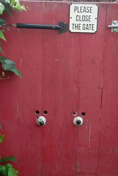 Adorable fence hack for dog owners! Bonus... A well fitted muzzle hole can prevent barking!! (Don't forget to treat properly so it's splinter free).