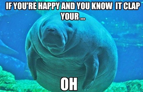 Celebrate Manatee Appreciation Day With Our Favorite #Sea_Cow #Memes http://ibeebz.com