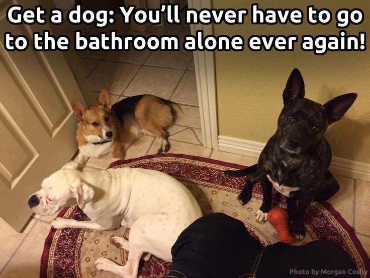 #puppylife #puppyplay #petqwerks #playandfetch #petparent #cuteness #doglover #petsofinstagram #petstagram #puppiesofinstagram #puppyoftheday #dogslife #dog
