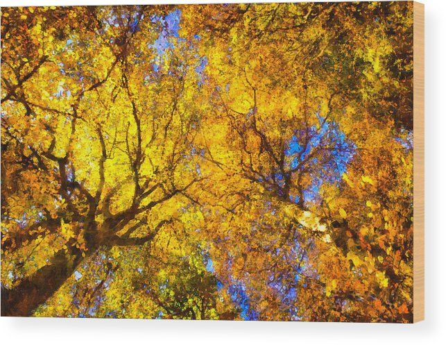 """Autumn trees wood print: Forest canopy in fall with beautiful warm colors: yellow, orange, brown and red tones. The image gets printed directly onto a sheet of 3/4"""" thick maple wood. Wood prints are extremely durable and add a rustic feel to any image. Click through and enjoy the texture and depth of this artwork in your home. Matthias Hauser - Art for your Home Decor and Interior Design."""