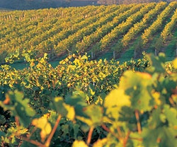 The Wineries of Margaret River