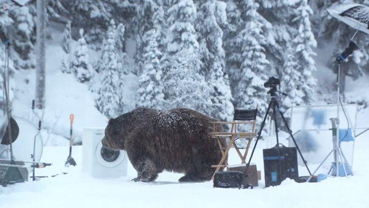 Urso invade gravação de comercial da Samsung