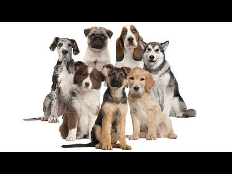 All Dog Breeds List In The World (A to Z)
