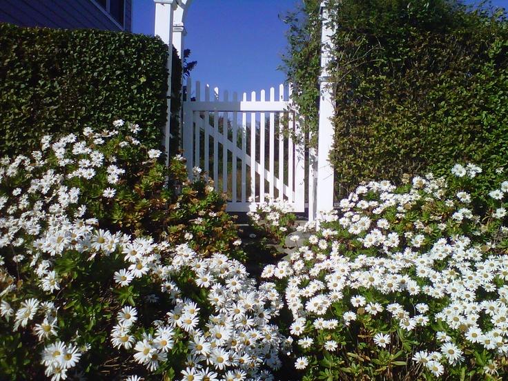 Mount auk daisies!!!
