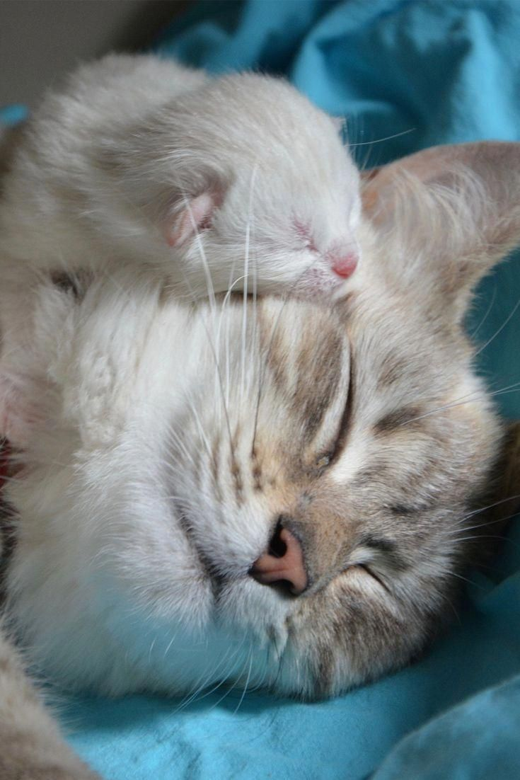 A Cute Kitten With Mom Cute Kitten Cat Cuteanimals Theworldisgreat Catsandkittens Kittens Cutest Cute Animals Cute Cats