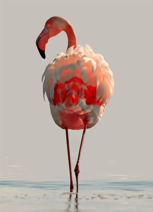 Best 25 pretty animals ideas on pinterest pretty horses for Flamingo feather paint