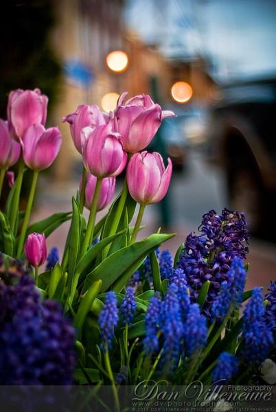 Window Box Flowers at Dusk - Newburyport, MA