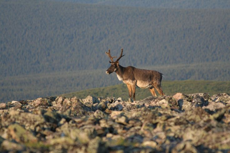 Parc national de la Gaspésie Claude Isabel | © Sépaq